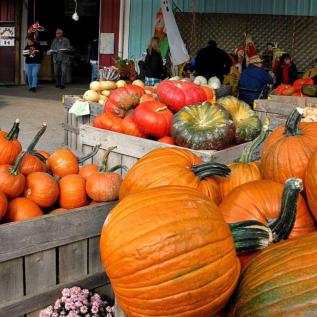 fall festival fun 5