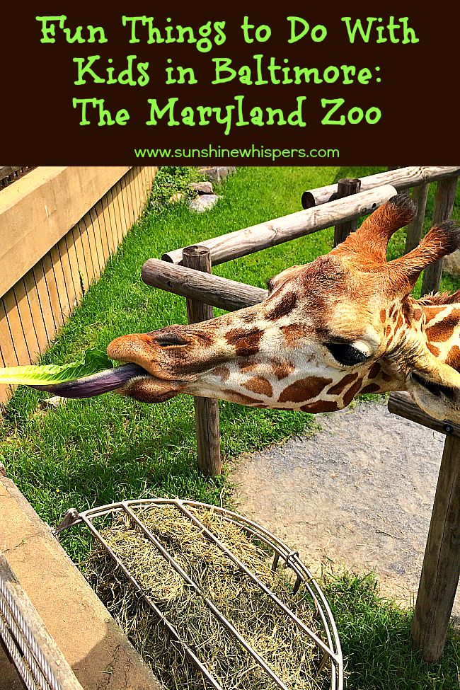 Fun Things To Do With Kids In Baltimore The Maryland Zoo