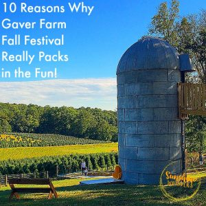 gaver farm fall festival