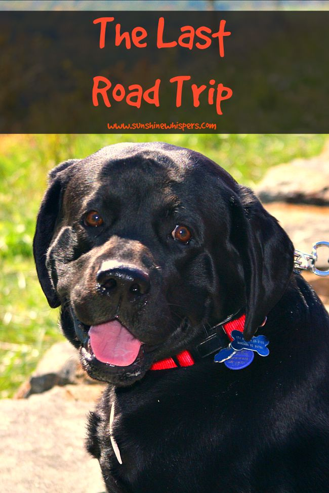 the last road trip