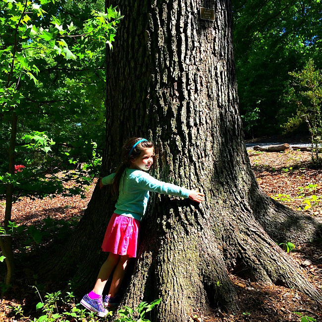 us national arboretum