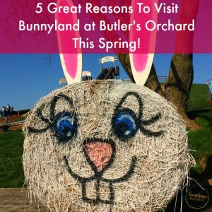 5 Great Reasons To Visit Bunnyland at Butler's Orchard This Spring!