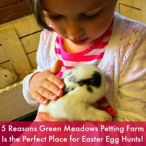 5 Reasons Green Meadows Petting Farm Is The Perfect Place For Easter Fun!