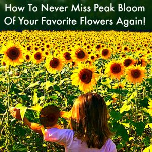 How To Never Miss Peak Bloom Of Your Favorite Flowers Again!