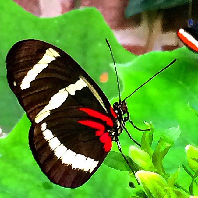 brookside gardens wings of fancy