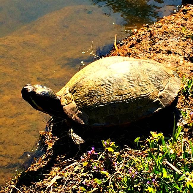 brookside gardens wildlife