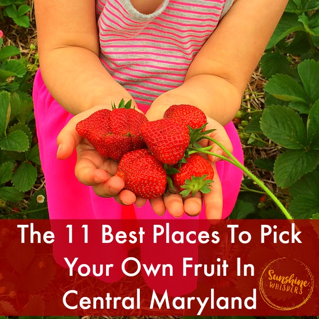 The 11 Best Pick Your Own Fruit Farms and Orchards in Central Maryland