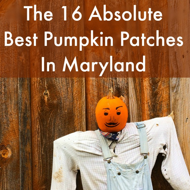 The 16 Absolute Best Pumpkin Patches In Maryland